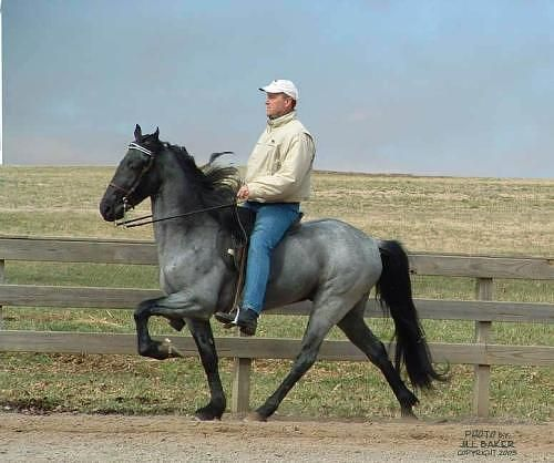 Tennessee Walking Horse, Lite Shod, Blue Roan. There is a difference between Walkers and Rackers look at the gait on the Walker the hind leg oversteps the front on a true WALK!!