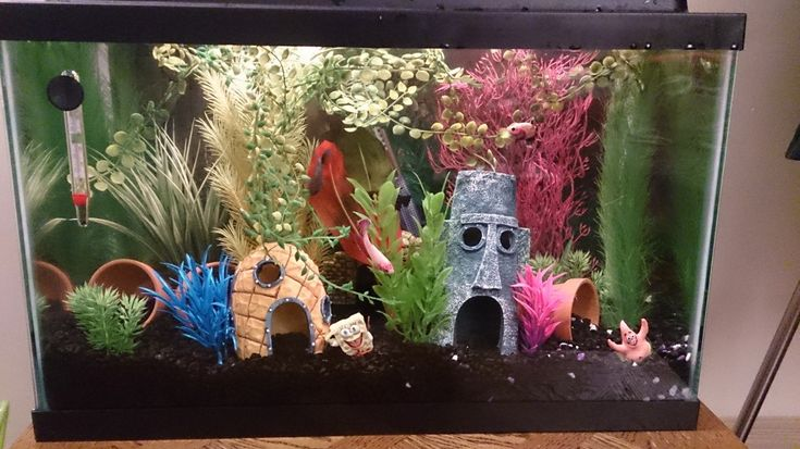 Best 25 fish tank themes ideas on pinterest aquarium for 2 gallon betta fish tank