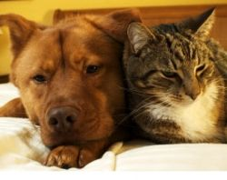 Can you leave pets alone at home when you have to go away? For how long is it safe to leave pets alone at home? What kind of pets can you leave...