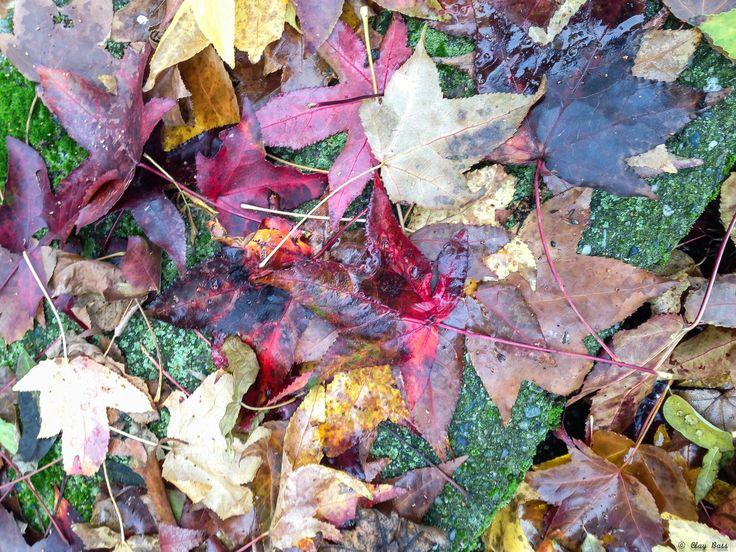 """così muoiono le foglie - ok, la chiudo così: un tappeto di foglie vicino al muro uccise dalla pioggia... e sottolineo """"uccise"""" perché sembra ci sia persino del sangue."""