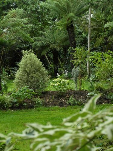 Jardin d'ombre: cornus alternifolia argentea, pittosporum variegata, hydrangea lanarth white et dicksonia antartica. Conception Canopées