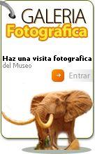 .:MUSEO DE LA FAUNA SALVAJE - FUNDACION DR. ROMERO NIETO :.