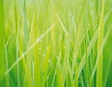 """""""Yrttimetsä"""" Fresh Home Greener Grass Kasteenraikasta vehreyttä ja metsän kukkien pehmeyttä. Ihana tuoksu olohuoneeseen."""