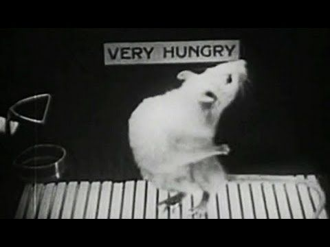 "Hungry Rat: ""Motivation and Reward in Learning"" 1948 Yale University Psycoholgy Experiments: http://youtu.be/L-DgV2vixSo #rats #psych #experiment"