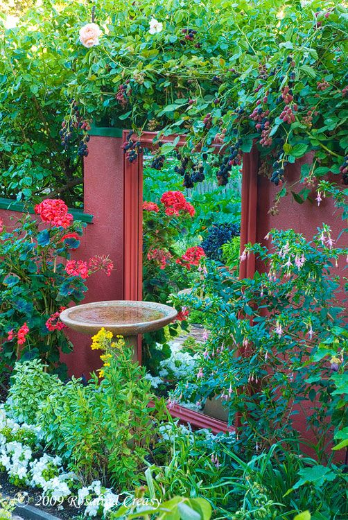 A mirror is a clever design element for small spaces. It reflects light and creates depth, making a compact area look so much bigger. Coupled with a bird bath, this is a simple but practical combination to bring diversity of bird life into the garden (pest management) & an appealing feature too. | The Micro Gardener