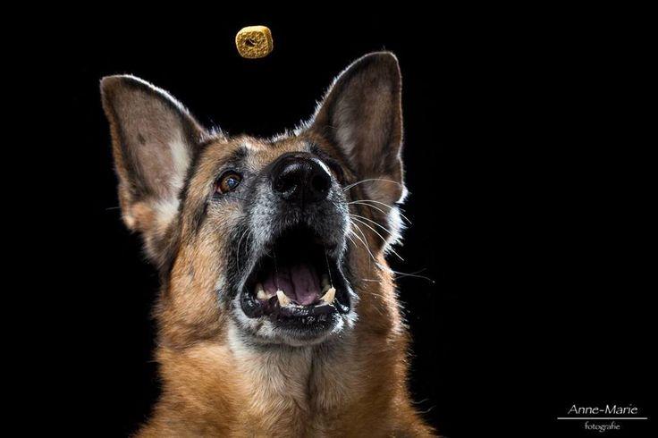 Foto Vangen!in de collectie collectie-bijzondere-huisdier-portretten