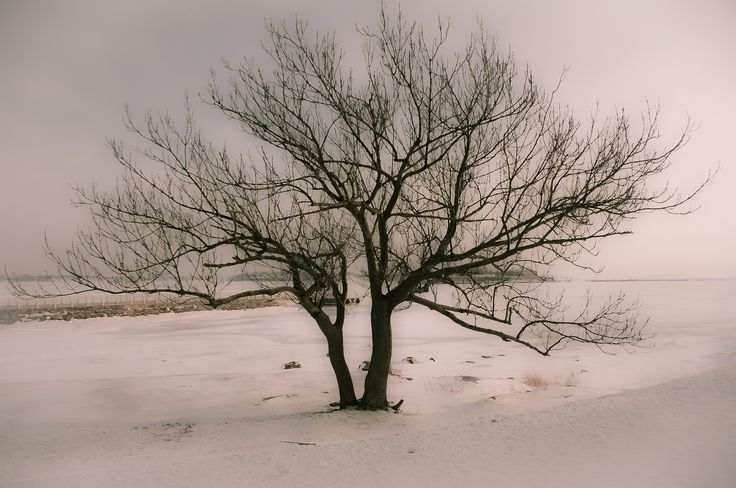 winter by Graziella Serra Art & Photo on 500px