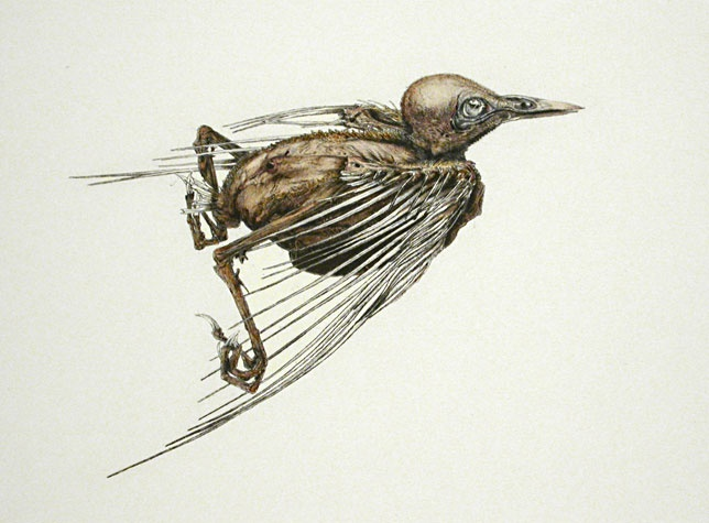 Arne Bendik Sjur. A Bird (30927), 2006. Drypoint with hand color. 1/1. 5-1/2 x 7 inches.