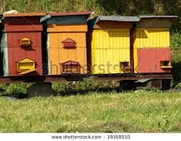 Image result for bee hives