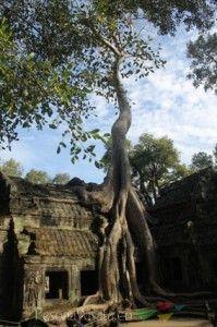 Kuil Ta Phrom yang cantik dan unik