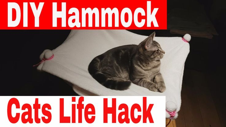 DIY Hammock For Cats // Inspiring DIY Projects For Cats // Life Hacks For Cat Owners