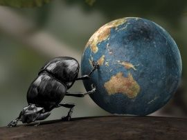 Funny Dung Beetle