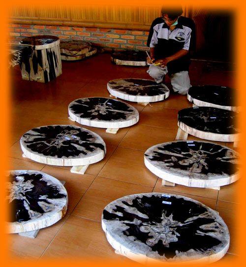 IndoGemstone Petrified Wood Slices