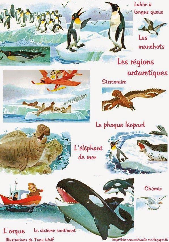 Fiche à imprimer pour illustrer la découverte de l'Antartique (également disponible l'Arctique)