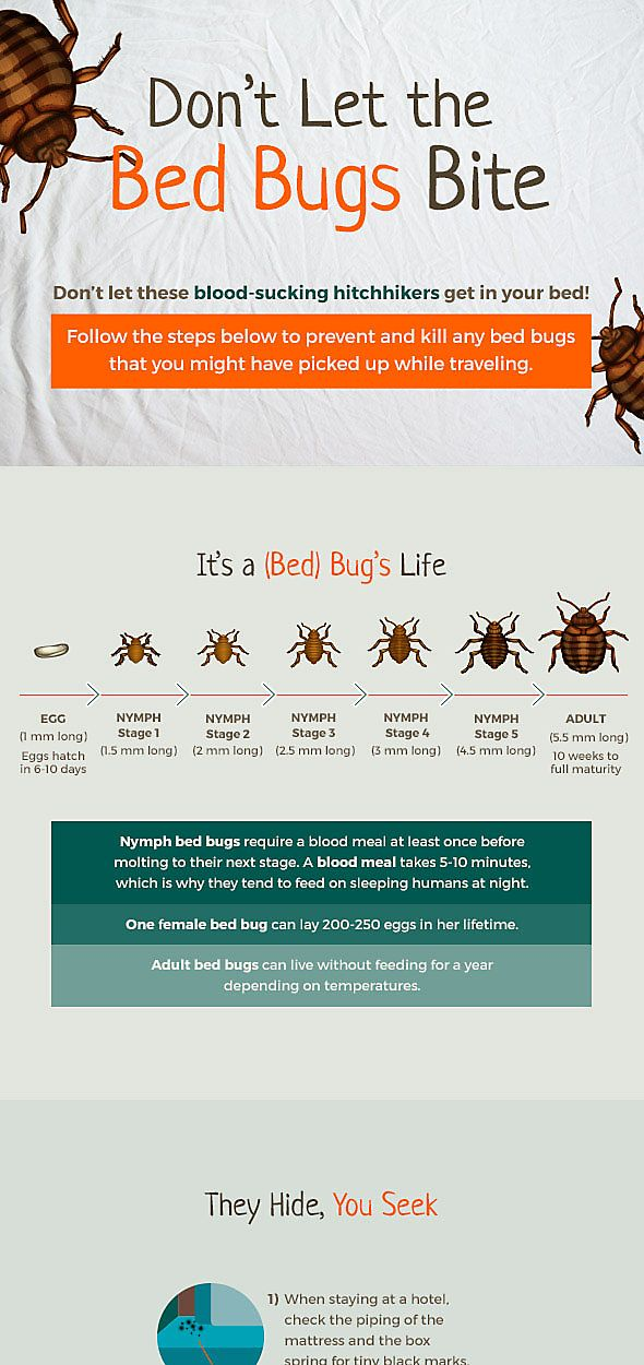 Bed Bug Lifecycle, Part 1 Life, Life cycles