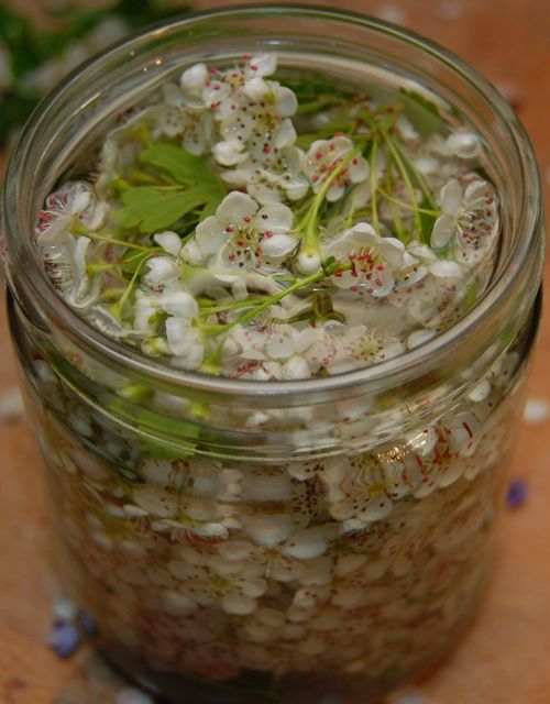 How to make...a collection of the basic medicine making guides...simple and practical instruction on how to create a variety of herbal preparations along with advice on ingredients and basic recipes. From Whispering Earth blog.