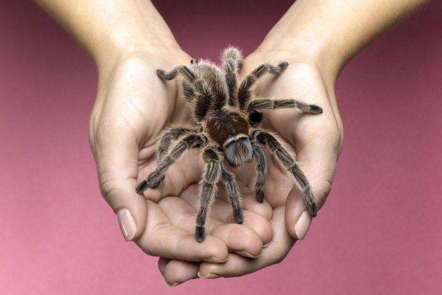 Pók mint háziállat?   Életmód 50