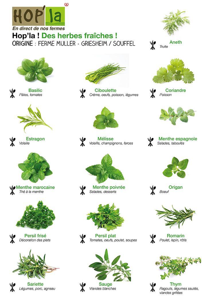 herbes ... Pour des grillades, des salades ou des sauces, en entrée, en plat ou en dessert : les herbes fraîches parfument à merveille les plats estivaux !  Découvrez un tableau récapitulatif des herbes aromatiques – et des exemples d'utilisations – que vous pourrez trouver à Hop'la