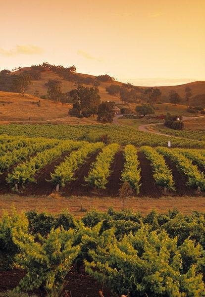Vineyard, Barossa Valley, South Australia, Australia. Photo: Jon Arnold, Doug Pearson
