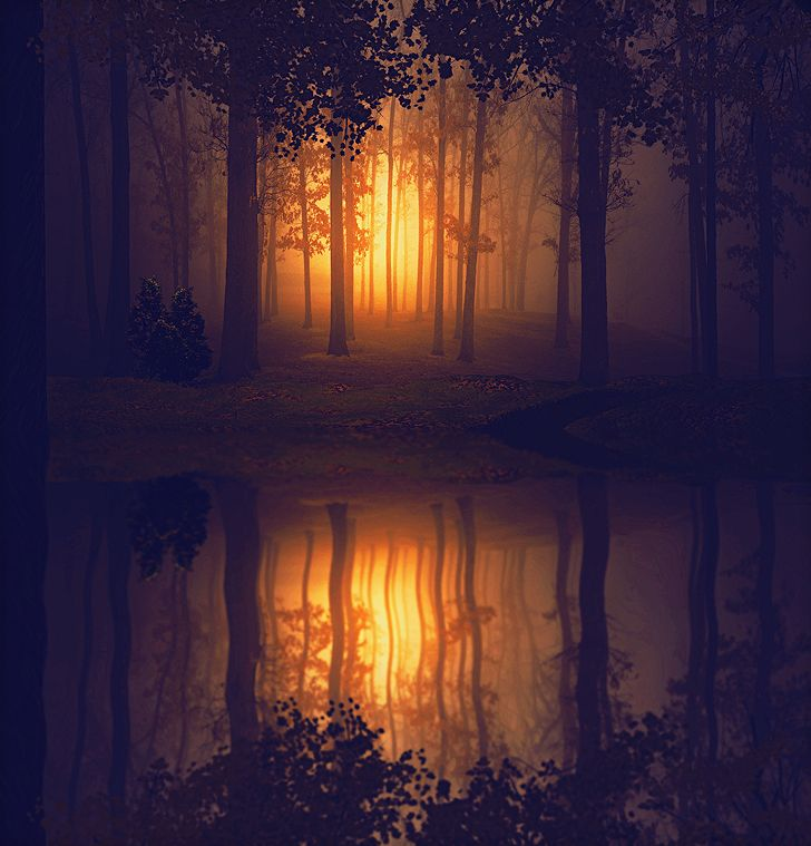 .Forests, Water Reflections, Trav'Lin Lights, Photos Manipulation, Dark Fairies, Feelings Good, Beautiful Food, Sun, Dresses Photography