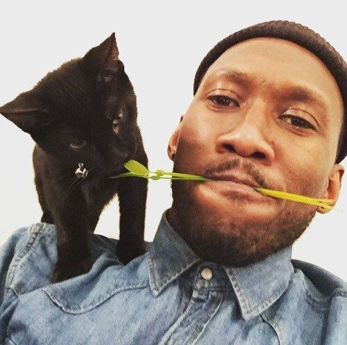 For Your Consideration: Mahershala Ali and his kitten Nas - https://www.instagram.com/p/65G7Xxttg9/