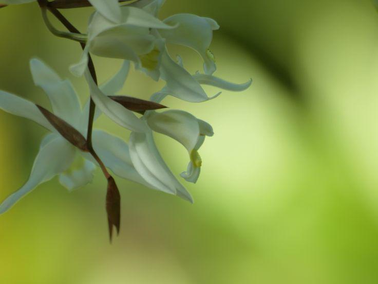 2014-02-16 新宿御苑にて。 久しぶりのOLYMPUS。70-300で撮るお花はやっぱりキレイ~♪ 「ファインダーを覗くことで無心になる」という先生のお言葉を胸に。