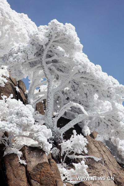 snow view on a cliff in the Yellow Mountain (Huang Shan Mountain)