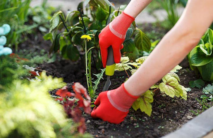 Do it yourself – 16 ways to kill garden weeds | New Zealand Handyman Magazine