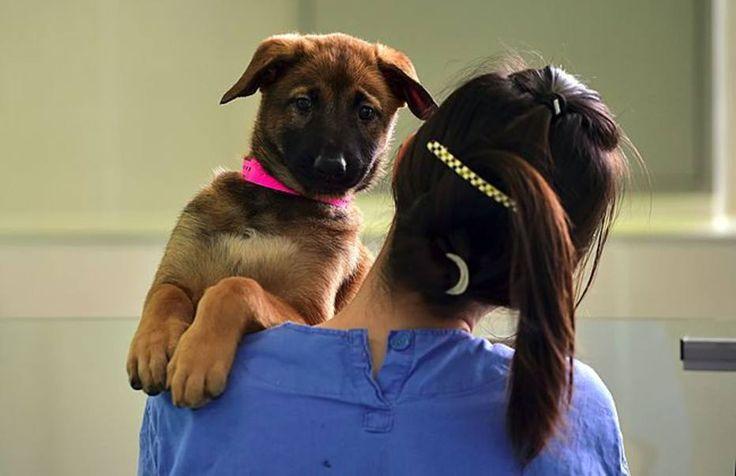 Por US$ 100 mil, clínica em Seul clona animais de estimação - Ciência - Estadão