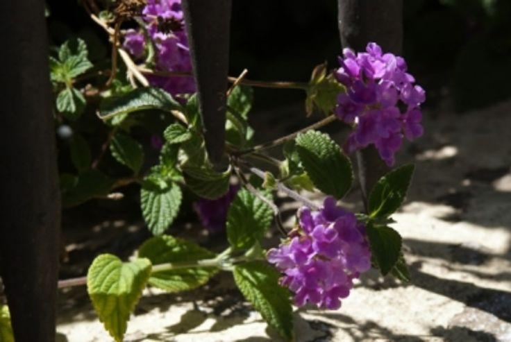 17 meilleures idées à propos de Jardin Ombragé sur ...