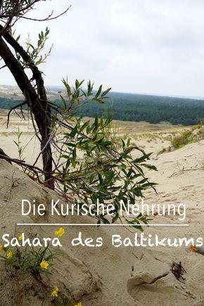 Die Kurische Nehrung ist eine Perle. Menschenleere Strände, riesige Dünen, Wälder, Hexen und Elche ...   #ReisenmitKind #Familie #Reisetip #Litauen #Baltikum