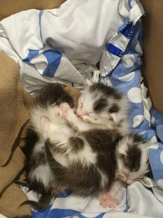 Kocie sierotki błagają o wsparcie! Walczymy o ich życie!