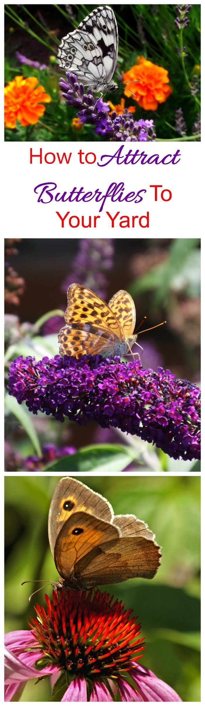 These tips for attracting butterflies will make your garden a butterfly magnet. #nectarplants #attractingbutterflies