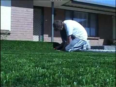 installation of synthetic artificial lawn