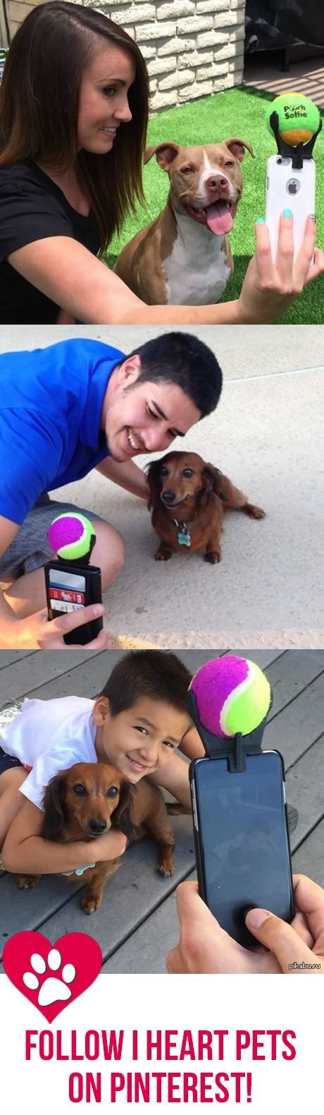 This is how you get a dog to face the camera and say cheese!