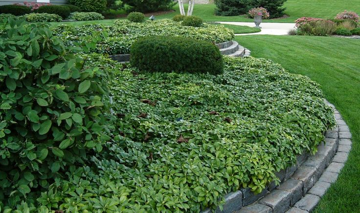 17 best images about flower bed outside of office building for Low landscaping plants