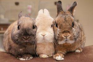 モフモフ界の天使♡ウサギの生態が可愛すぎる! - NAVER まとめ