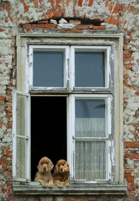 Oltre 25 fantastiche idee su cornici delle finestre su - Rivestire i davanzali delle finestre ...