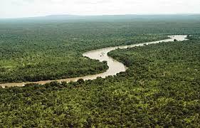 Resultado de imagen para tipos de bosques tropicales