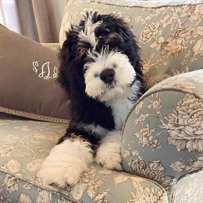 Puppys, Orlando and The cutest on Pinterest