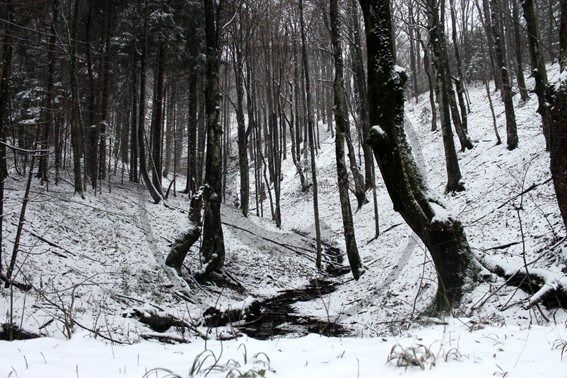 Parc de Plitvice, Croatie | Christie Cartes  $2 - Photo de Thibaud Laroche - christiecartes.com