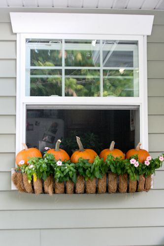 Decorating for Halloween.Putting little pumpkins in the window box