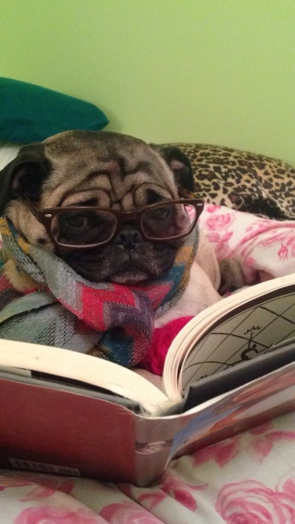 this reminds me of Brutus when he is studying up on his MENSA tests :)