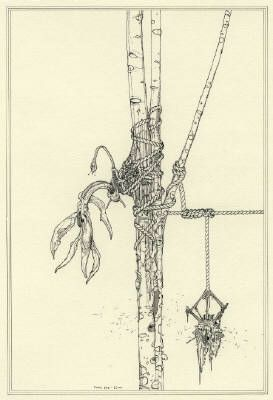 Ernesto CaivanoFloral Veins, and Conduits: 006, 2006   9.375 x 6.375 Inc