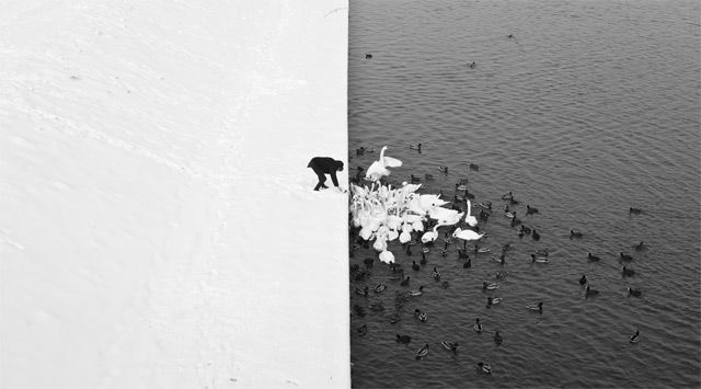 A Man Feeding Swans in the Snow in Krakow. Photographed by Marcin Ryczek.