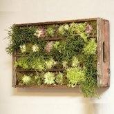 Faire un mini jardin dans une caisse en bois.