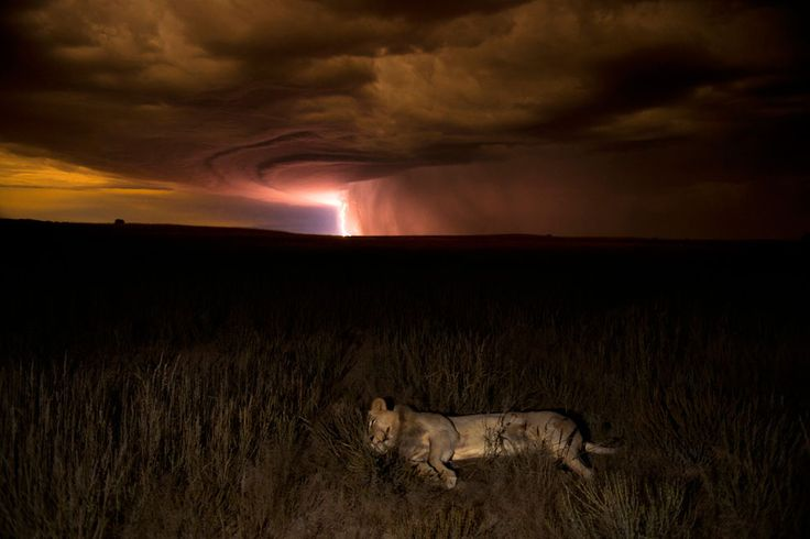 Wildlife Photographer of the Year 2012 -- LOVE this competition!!!