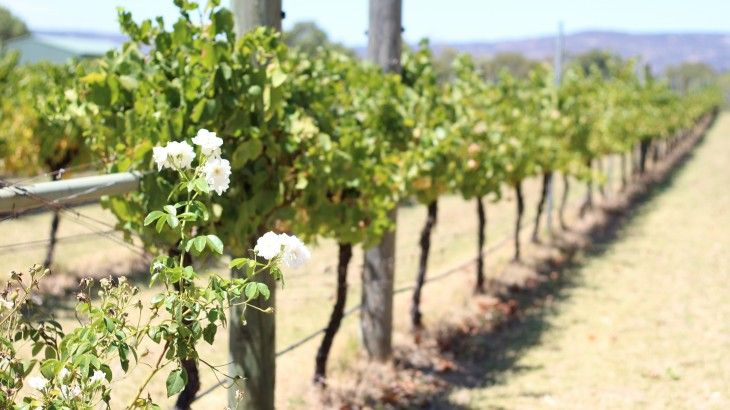 Book a Swan Valley Wine Tour with Sightseeing Pass Australia
