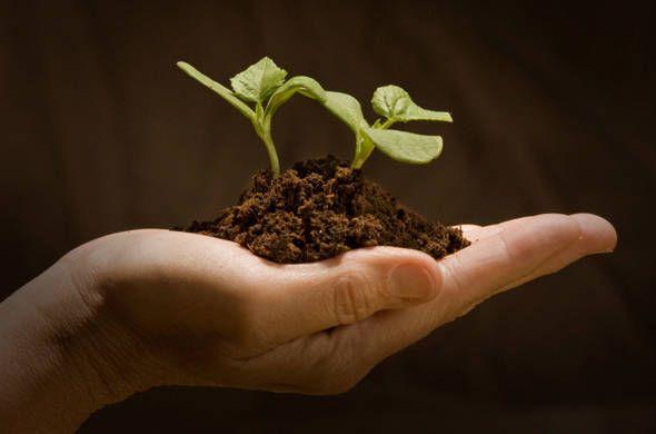 13 semi a costo zero per il nostro orto disponibili nella nostra casa - Ambiente Bio