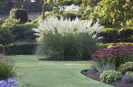 Best 25 ornamental grasses ideas on pinterest fountain for Ornamental grasses for small spaces